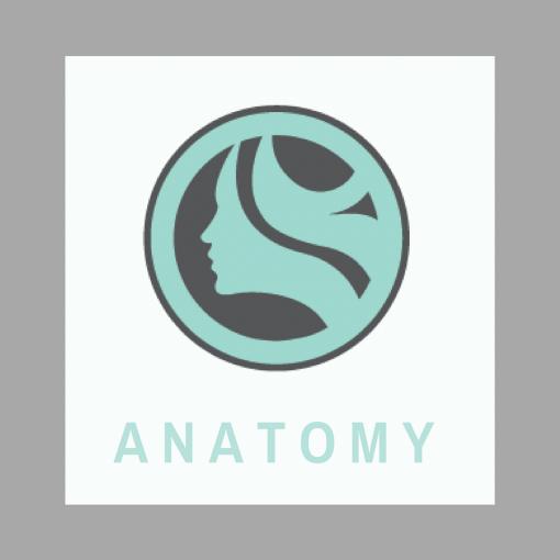 123 Face Anatomy Online Courses tx nm al ar lmt
