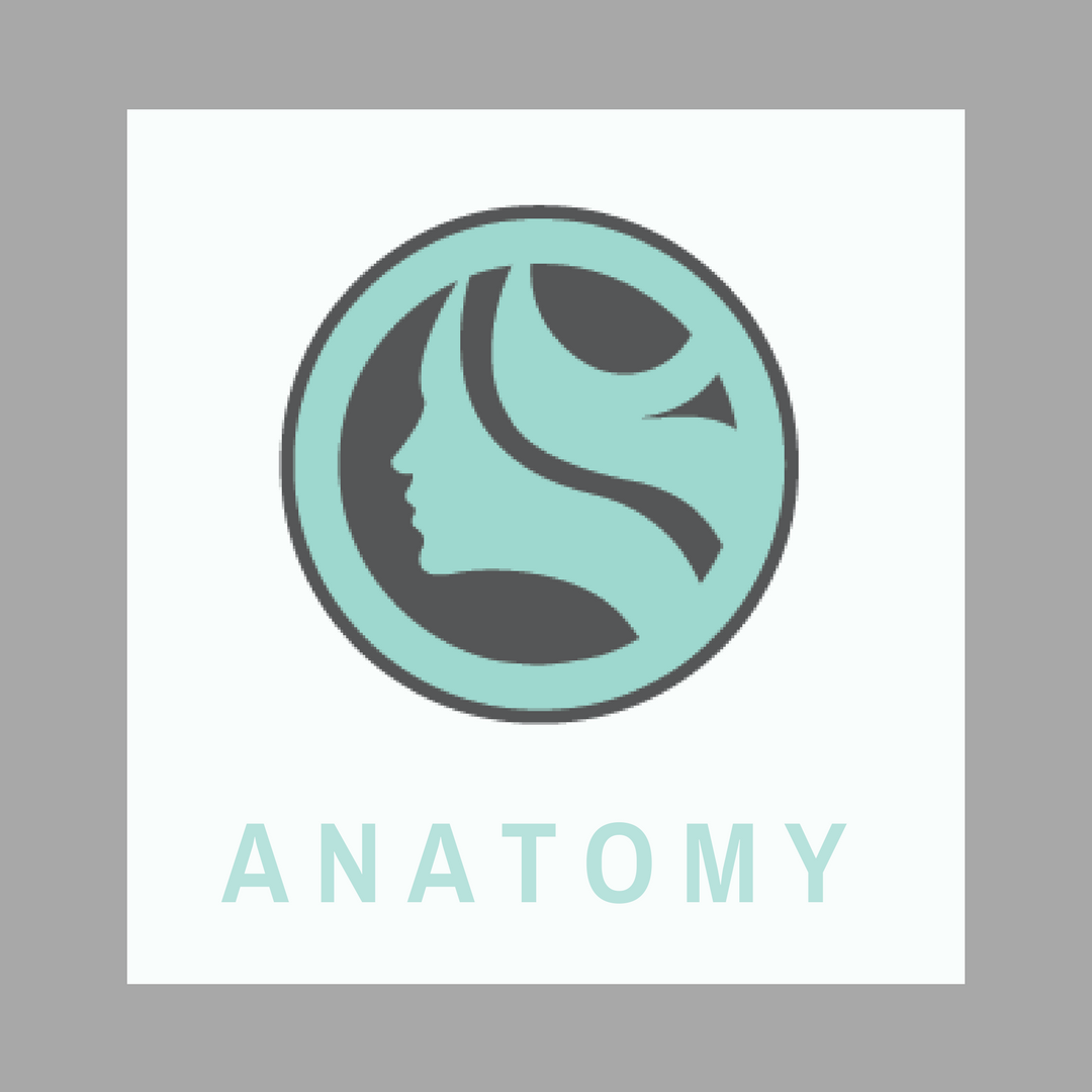 123 Face Anatomy Online Courses 12 CE Massage TX NM AL AR LMT\'s